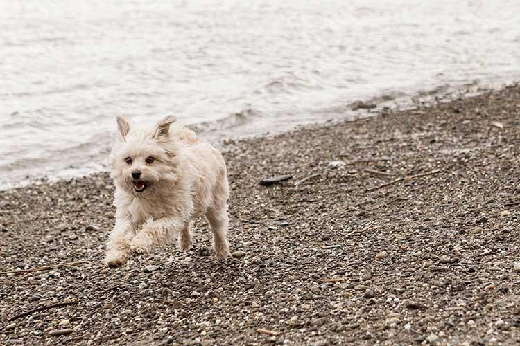 Joey running on the beach