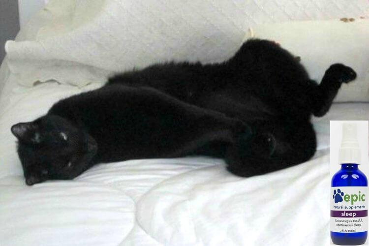Cat-Wakes-Me